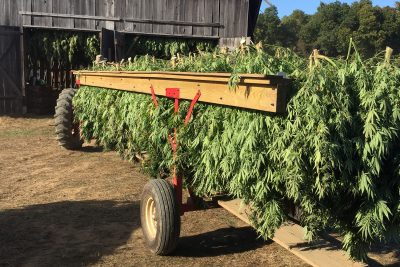 hauling hemp on trailer